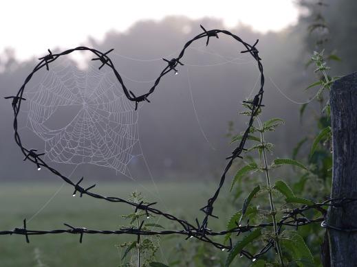 cobweb-1949778_1280